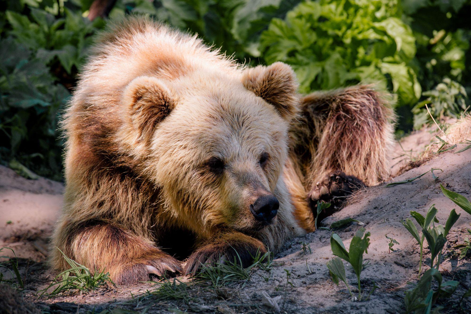 Допоможи ведмедикам – одягни шкарпетки
